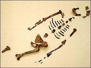 Il y eut Lucy, ensuite homo habilis, puis homo erectus lesquels utilisèrent des outils. Quel changement se produisit alors ?