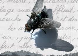 Ton écriture maladroite et pleine de ratures est difficilement lisible, tu écris en ...