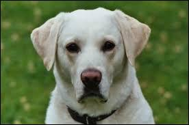 Quelle race de chien est-ce ?