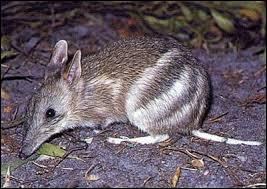 Quizz les animaux d 39 australie quiz animaux - Animal qui mange les fourmis ...