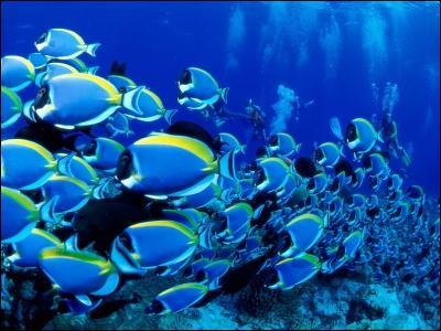 Quel est, selon vous, le pluriel du mot  pez  (poisson) ?