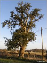 L'écorce d'un chêne-liège portugais a produit une quantité de liège suffisante à la fabrication de...