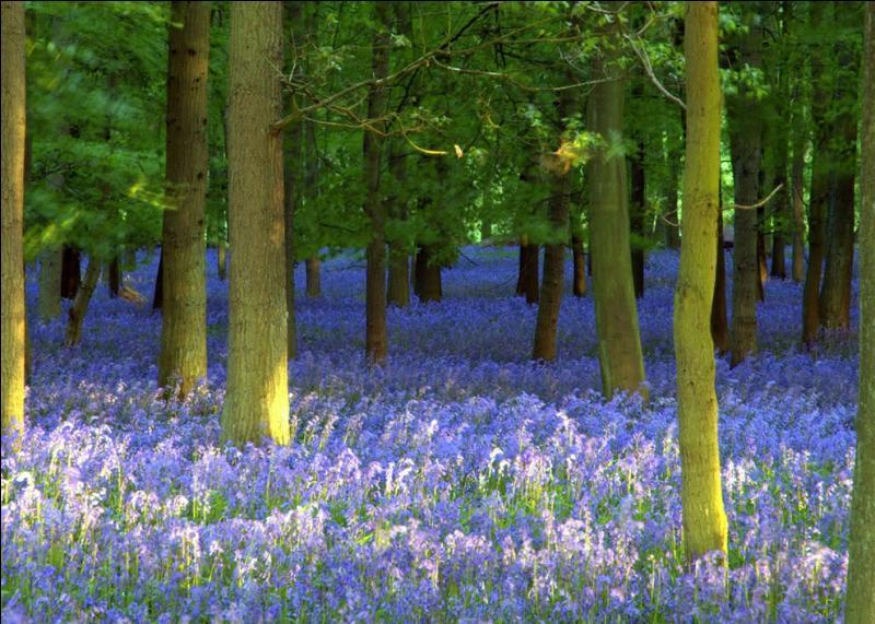 C'est une création française, une musique qui a fait le tour du monde, un véritable hymne à la nature : Forest Hymn !