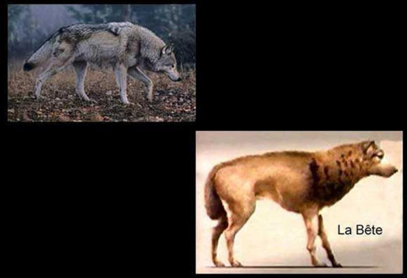 Entre 1764 et 1767, une série de meurtres se passent dans la région actuelle de la Lozère et de ses environs. On se rend compte que c'est un animal qui attaque les gens. On appelle cet animal, la bête du Gévaudan. Mais pourquoi tous ces morts ?
