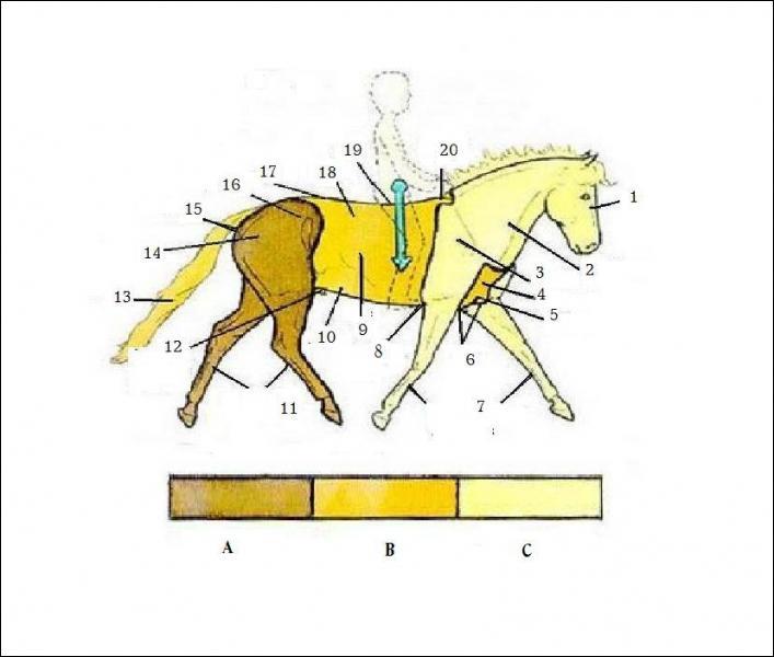 quizz galop 1 quiz chevaux galop 1. Black Bedroom Furniture Sets. Home Design Ideas