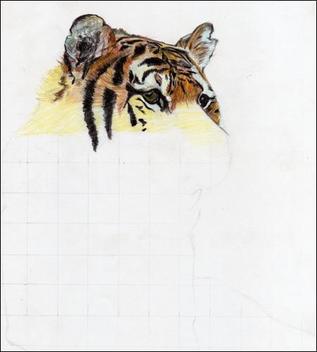 Les oreilles du tigre ont une forme plutôt :