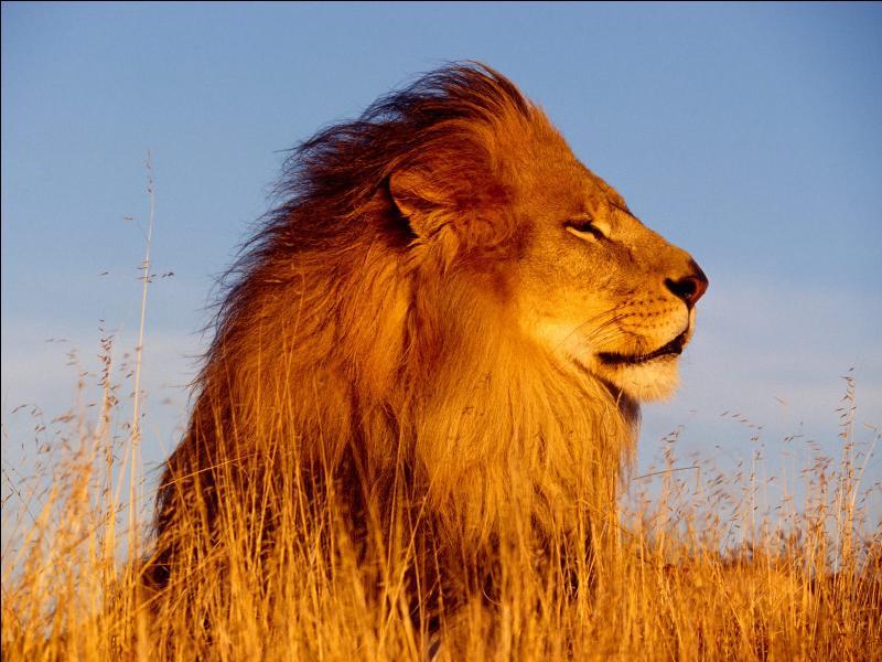 Lequel de ces lions de la mythologie n'existe pas ?