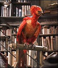 Comment s'appelle l'oiseau de Dumbledore ?