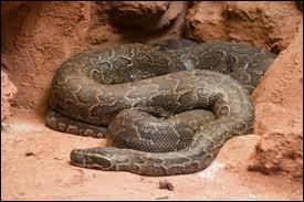 Quizz les serpents quiz serpents reptiles - Quel est le plus grand port d afrique ...
