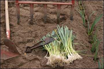 quizz jardinez jardinez on repique on plante quiz plantes arbres. Black Bedroom Furniture Sets. Home Design Ideas