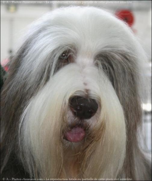 Quelle est la race de chien ?