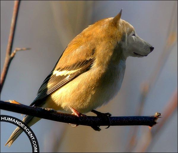 Il y a un oiseau et :