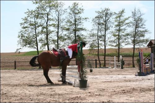 Que fait la cavalière penchée sur l'encolure de son cheval ?