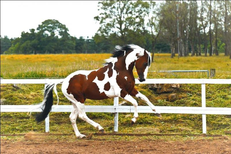 Ce cheval est