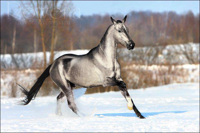 Un cheval peut galoper :