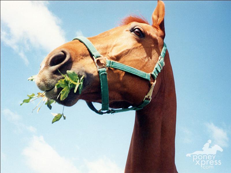 Le cheval mange :