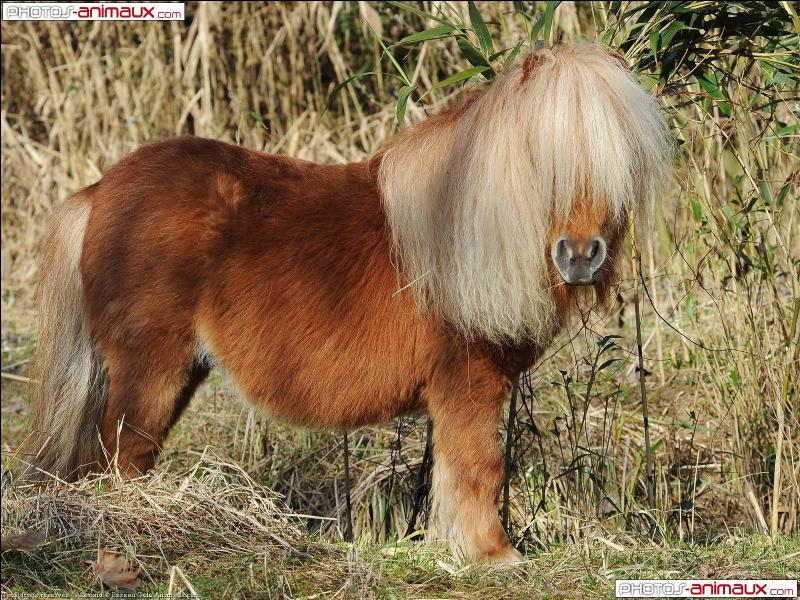 Quizz les chevaux quiz chevaux - Cheval rigolo ...