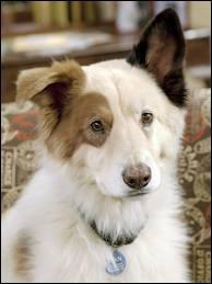 Dans quelle série y a-t-il un chien qui parle ?