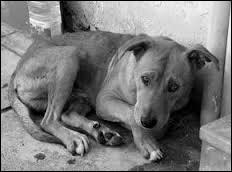 La capitale de ce pays pourrait être une phrase que l'on dirait à ce pauvre chien.