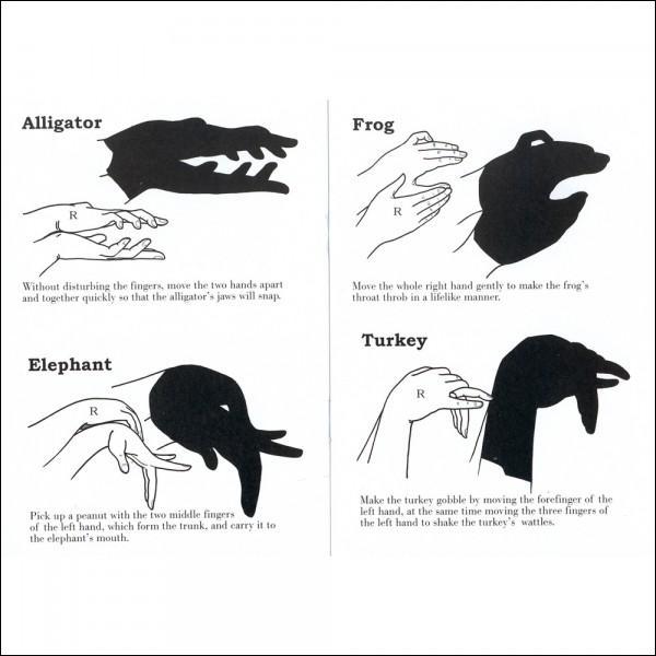 Sur cette image, il y a un oiseau dont le cri s'appelle le gloussement !