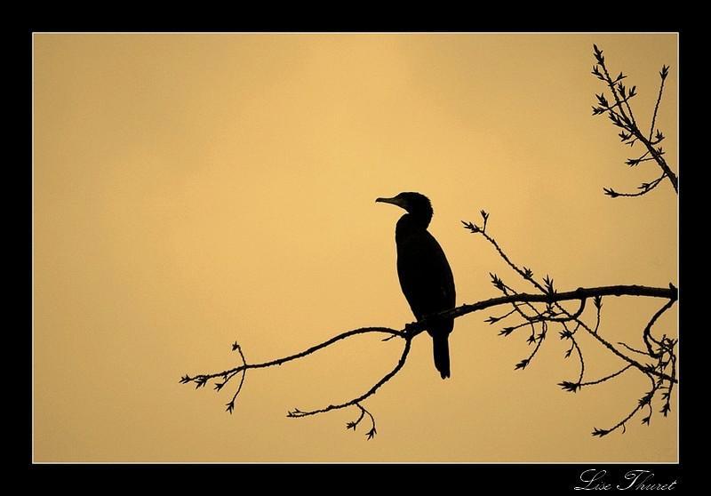 Comme tu peux le voir, cet oiseau est un cormoran !