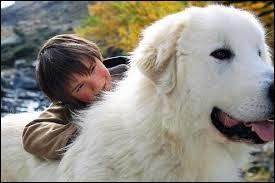 Quelle est la race de Belle cette magnifique chienne qui accompagne Sébastien ?
