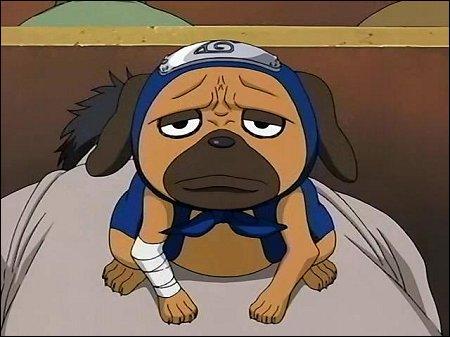 Comment s'appelle ce chien ninja ?