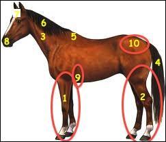 Comment s'appelle cette partie du poney montrée sur la photo n° 5 ?