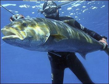 Ce poisson carnassier a généré une équipe de chasseurs sous-marins dingues de lui, on peut parler de confrérie, ils se sont donné un nom, retrouvez-le !