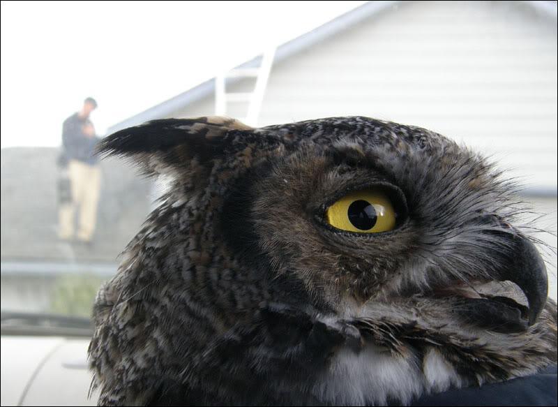 D'après vous, quel est cet oiseau ?