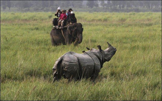 D'après vous, à quelle espèce appartient ce rhinocéros ?