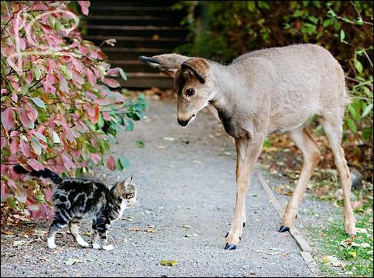 L'amitié sans confiance, ...