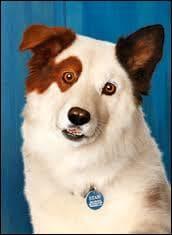 Dans la série  Doggyblog  de Disney Channel, le chien s'appelle :