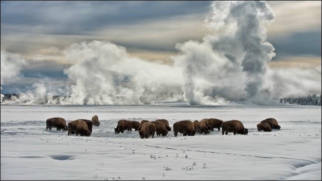 Tu as eu l'opportunité de visiter les vastes plaines de l'Amérique du Nord, et c'est ce spectacle que tu as pu voir !