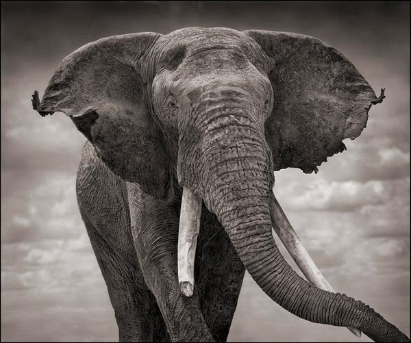 A-t-on vu un éléphant en colère retourner une voiture en Afrique du Sud ?