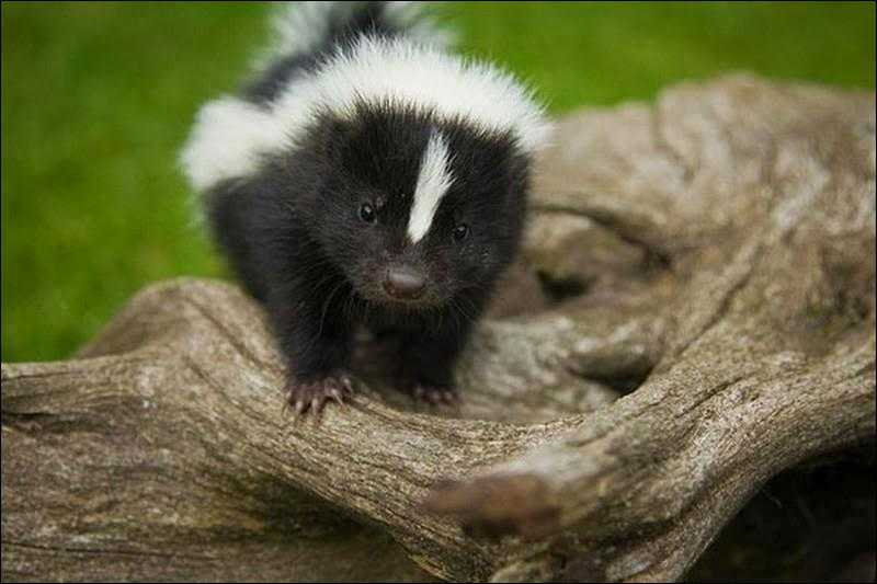 Vous le reconnaissez, c'est un bébé panda !