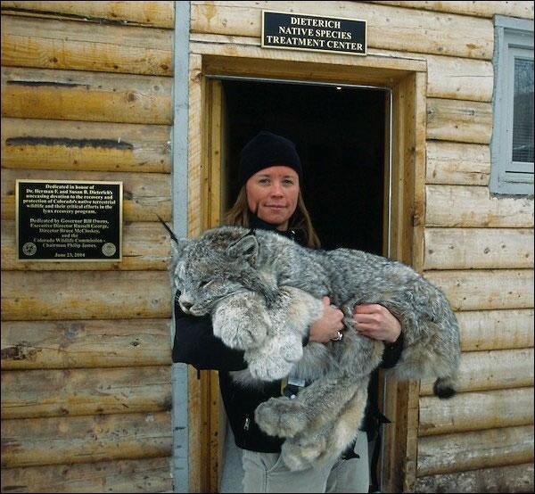 Dans ses bras, cette personne porte un lynx !
