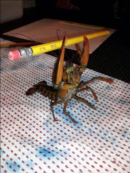 Vous le connaissez sûrement, c'est l'une des très nombreuses espèces de crabes !