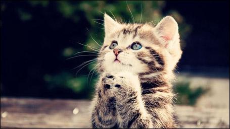 Comment s'appelle le bébé du chat ?