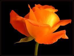 La rose orange symbolise :