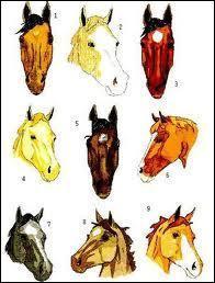 Sur cette image lequel de ces chevaux  boit dans son blanc  ?