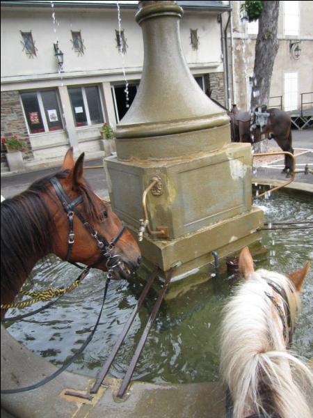 Un cheval est fait en descendant lorsque ...
