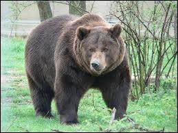 Où vit l'ours brun ?