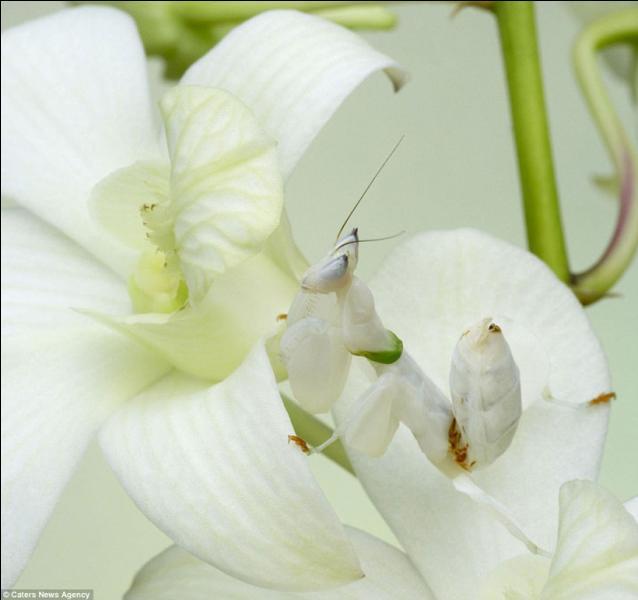 J'ai mis cette photo pour faire joli, car en fait, il n'y a aucun animal dessus, juste des fleurs !
