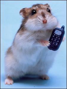 Lequel des ces hamsters est sur la photo ?