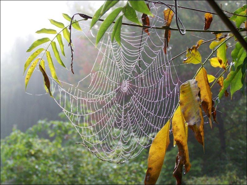 L'araignée --------- sa toile pour attraper les moucherons qui ne vont pas manquer de se risquer dans ses parages.