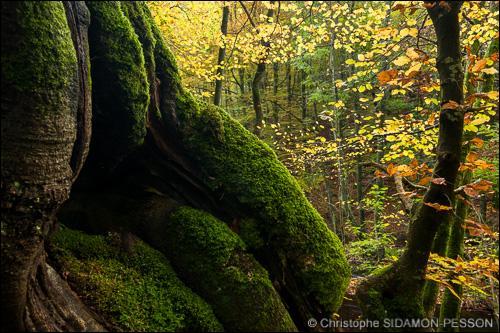 Si t'es perdu dans la forêt et que tu restes immobile pendant deux ans, il va te pousser de la mousse sur un côté de tes jambes.