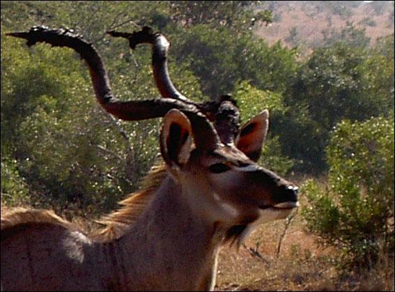 Quel est cet animal vivant en Afrique ?