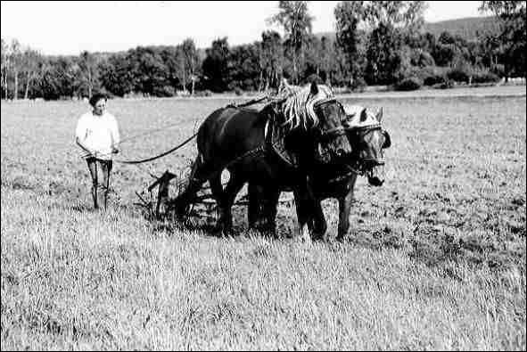On ne (savoir) s'il (demeurer) des agriculteurs qui (travailler) encore avec des chevaux.