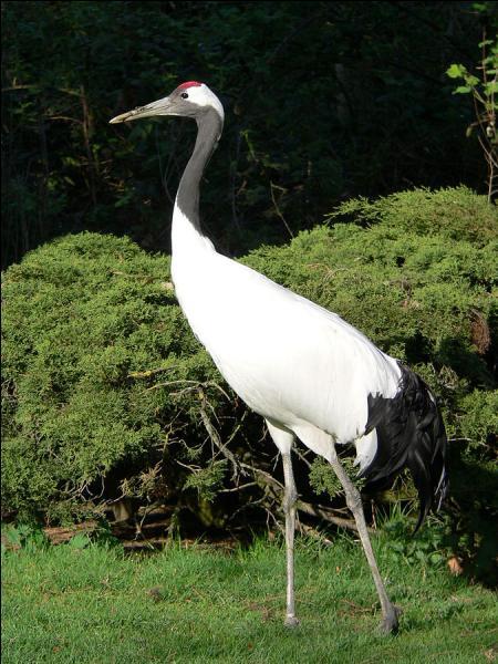 quizz des oiseaux rares quiz animaux oiseaux. Black Bedroom Furniture Sets. Home Design Ideas